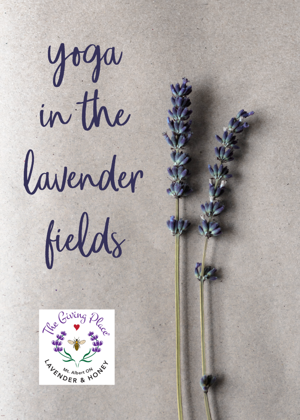 yoga in the lavender fields title with a sprig of lavender flowers